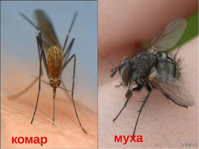 О каких насекомых загадка? «Кто над нами вверх ногами?» комар муха