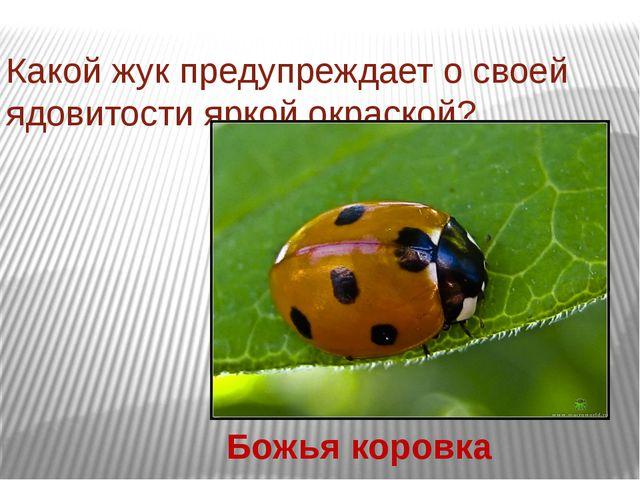 Какой жук предупреждает о своей ядовитости яркой окраской? Божья коровка