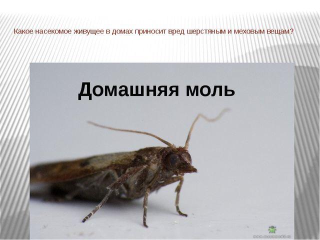 Какое насекомое живущее в домах приносит вред шерстяным и меховым вещам? Дома...