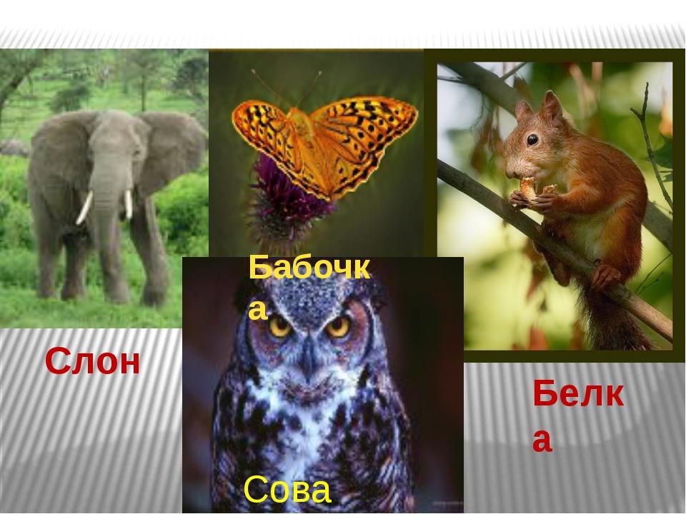 Слон Бабочка Белка Сова