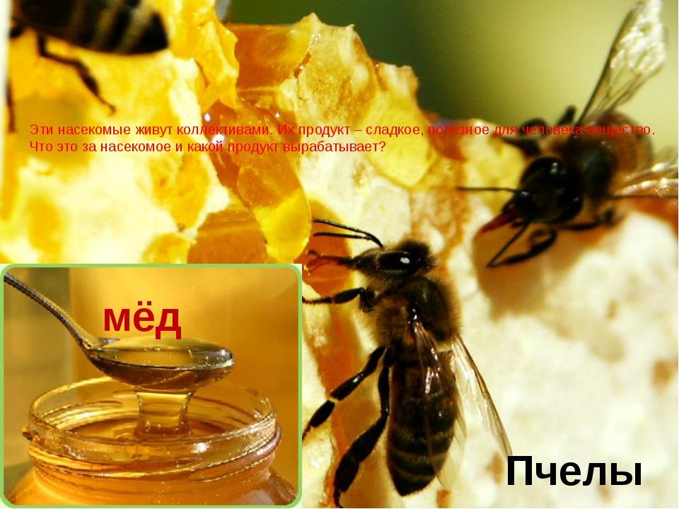 Эти насекомые живут коллективами. Их продукт – сладкое, полезное для человека...