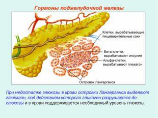 При недостатке глюкозы в крови островки Лангерганса выделяют глюкагон, под де