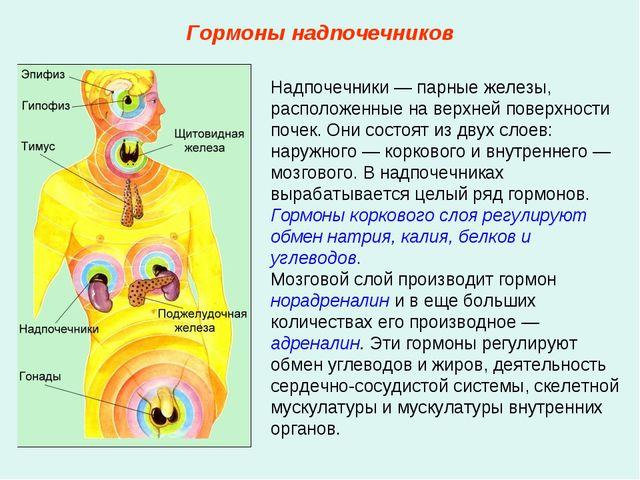 Надпочечники — парные железы, расположенные на верхней поверхности почек. Они...