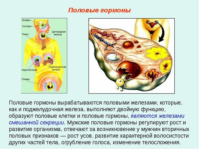 Половые гормоны вырабатываются половыми железами, которые, как и поджелудочна...