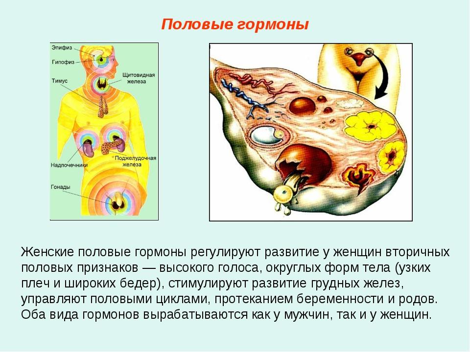 Женские половые гормоны регулируют развитие у женщин вторичных половых призна...