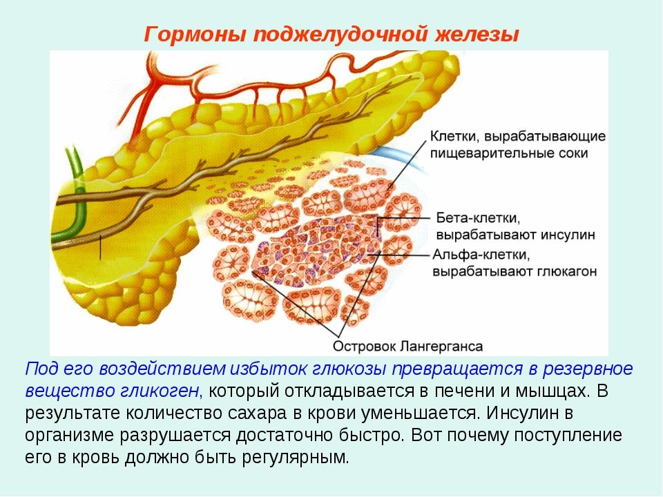 Под его воздействием избыток глюкозы превращается в резервное вещество гликог...