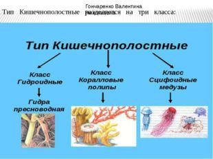 ТипКишечнополостныеразделяетсянатрикласса:  Гончаренко Валент