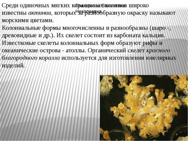 Среди одиночных мягких коралловых полипов широко известныактинии,которых за...