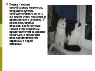 Кошки – весьма своеобразные животные, непредсказуемые, свободолюбивые, но в т