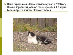 Наша первая кошка Клео появилась у нас в 2009 году. Она не породистая, однако