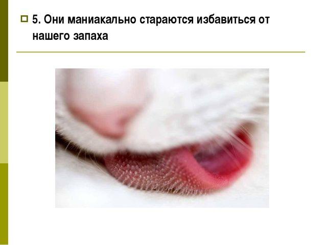 5. Они маниакально стараются избавиться от нашего запаха