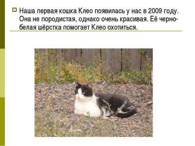 Наша первая кошка Клео появилась у нас в 2009 году. Она не породистая, однако...