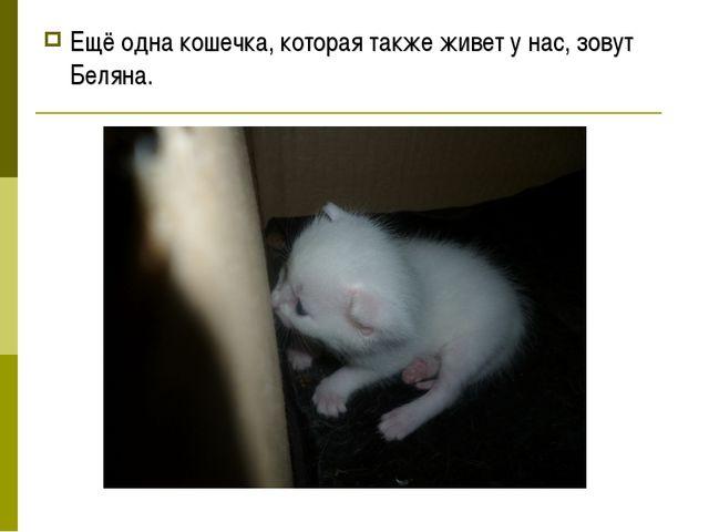 Ещё одна кошечка, которая также живет у нас, зовут Беляна.