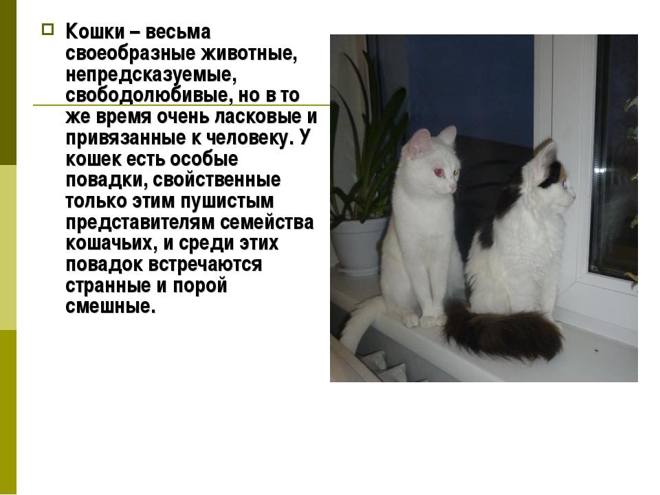 Кошки – весьма своеобразные животные, непредсказуемые, свободолюбивые, но в т...