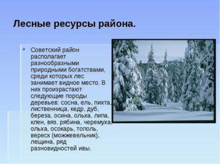 Лесные ресурсы района. Советский район располагает разнообразными природными