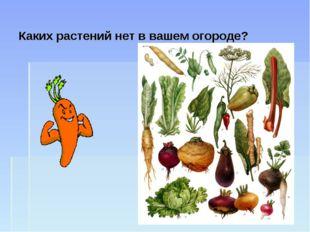 Каких растений нет в вашем огороде?