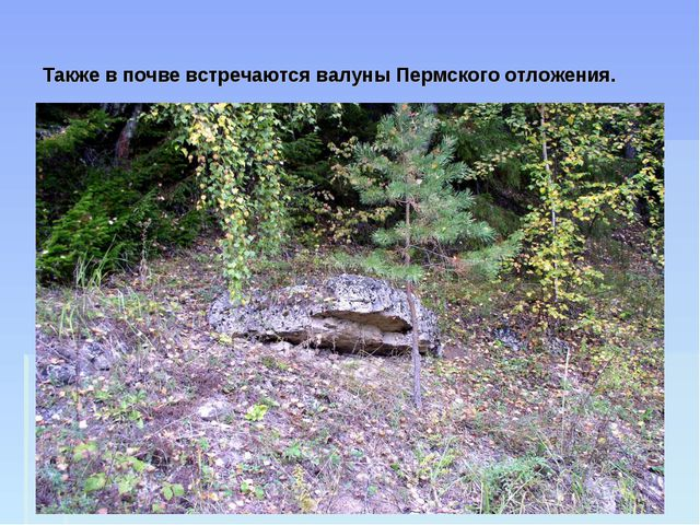 Также в почве встречаются валуны Пермского отложения.