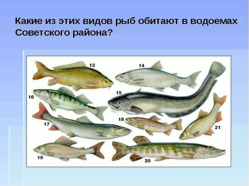 Какие из этих видов рыб обитают в водоемах Советского района?