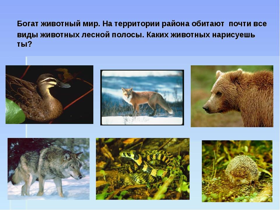 Богат животный мир. На территории района обитают почти все виды животных лесн...