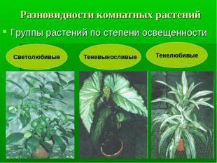 Разновидности комнатных растений Группы растений по степени освещенности Свет