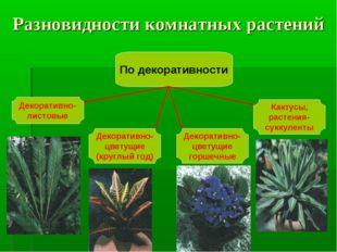 Разновидности комнатных растений По декоративности Декоративно- листовые Деко