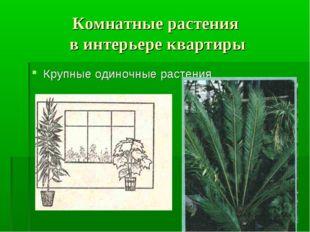Комнатные растения в интерьере квартиры Крупные одиночные растения
