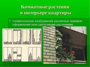 Комнатные растения в интерьере квартиры Схематическое изображение различных п