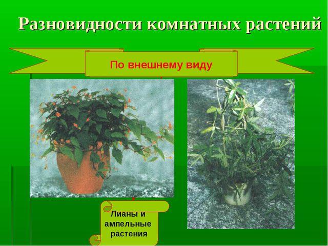 Разновидности комнатных растений По внешнему виду Лианы и ампельные растения