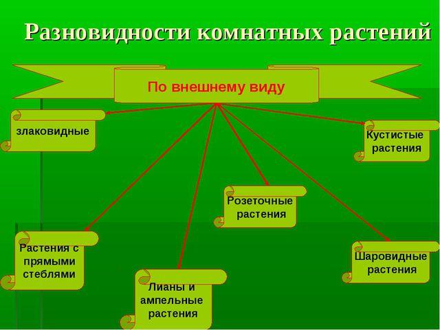 Разновидности комнатных растений По внешнему виду злаковидные Шаровидные раст...