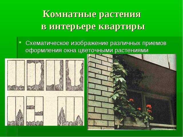 Комнатные растения в интерьере квартиры Схематическое изображение различных п...