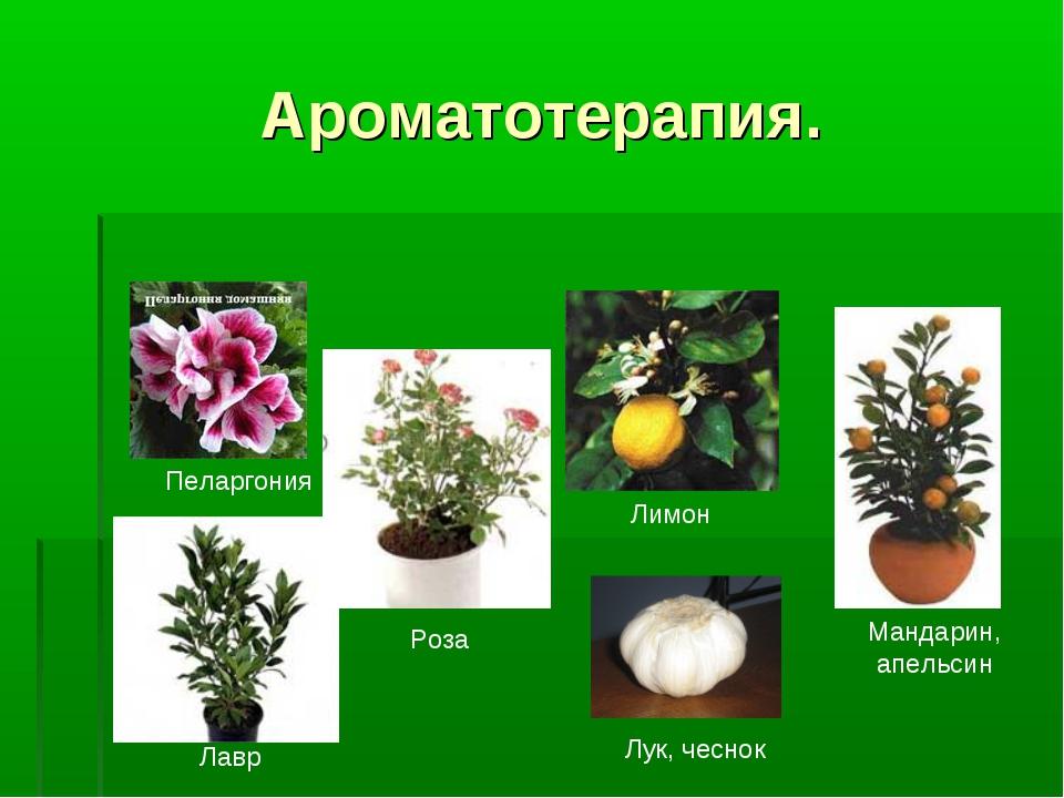 Ароматотерапия. Пеларгония Лавр Роза Лимон Лук, чеснок Мандарин, апельсин