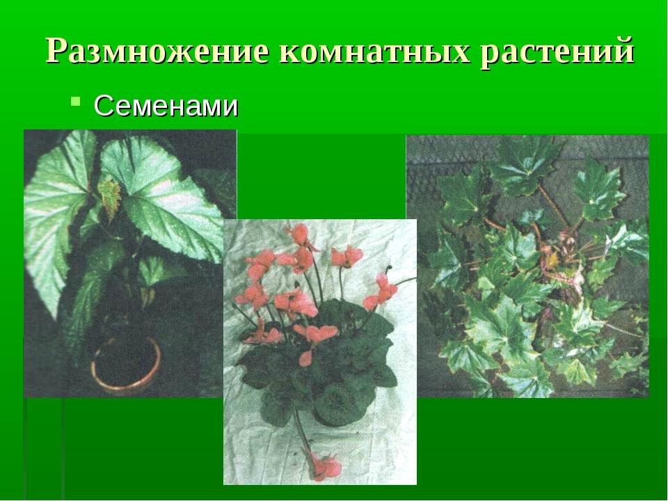 Размножение комнатных растений Семенами