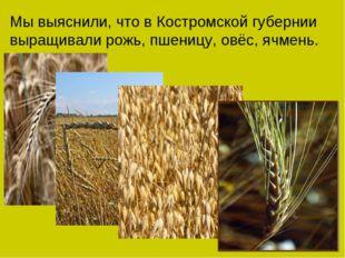 Мы выяснили, что в Костромской губернии выращивали рожь, пшеницу, овёс, ячмень.
