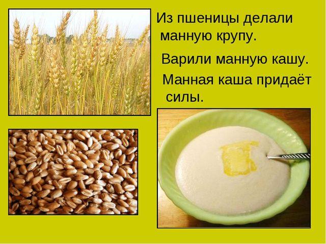 Из пшеницы делали манную крупу. Варили манную кашу. Манная каша придаёт силы.