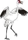 http://www.zooclub.ru/attach/fotogal/clip/birds/108.jpg
