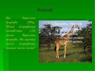 Вес взрослого жирафа 700кг. Масса жирафенка составляет 1/10 массы взрослого