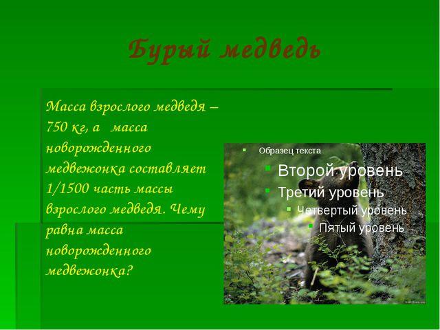Бурый медведь Масса взрослого медведя – 750 кг, а масса новорожденного медвеж...