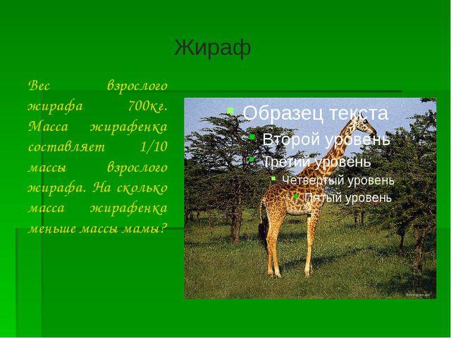 Вес взрослого жирафа 700кг. Масса жирафенка составляет 1/10 массы взрослого...