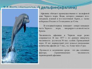 2.4.Бутылконосный дельфин(афалина) Афалины обитают преимущественно в шельфов