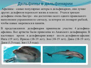 Дельфины в дельфинарии Афалины - самые популярные актеры в дельфинариях, они