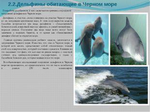 2.2.Дельфины обитающие в Черном море Попробуем разобраться, в чем заключается