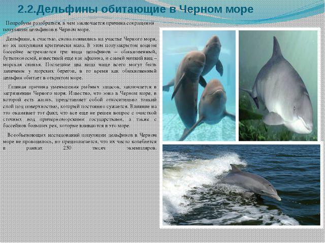 2.2.Дельфины обитающие в Черном море Попробуем разобраться, в чем заключается...
