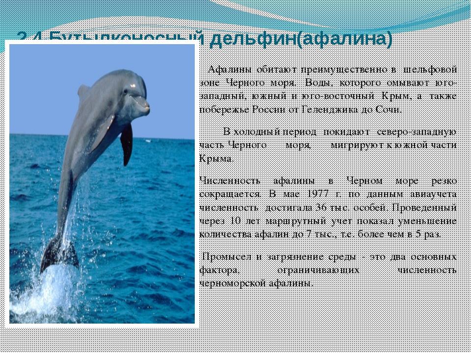 2.4.Бутылконосный дельфин(афалина) Афалины обитают преимущественно в шельфов...