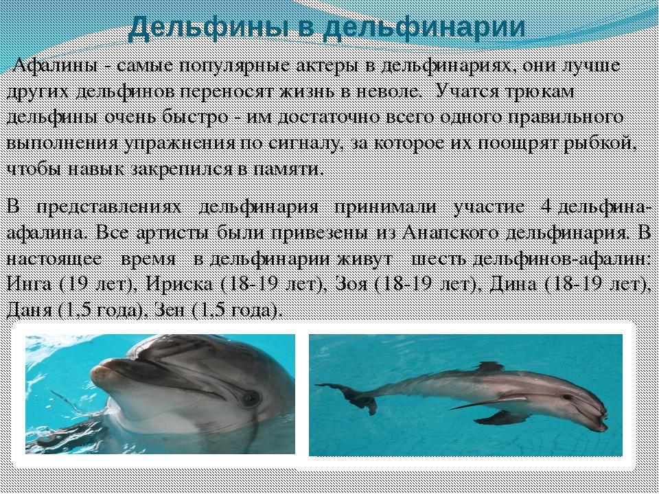 Дельфины в дельфинарии Афалины - самые популярные актеры в дельфинариях, они...