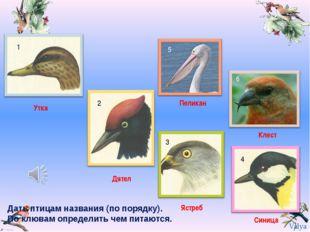 Дать птицам названия (по порядку). По клювам определить чем питаются. 1 2 3 4