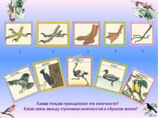 1 2 3 4 5 Каким птицам принадлежат эти конечности? Какая связь между строение