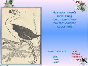 Из каких частей тела птиц составлено это фантастическое животное? Ответ: голо