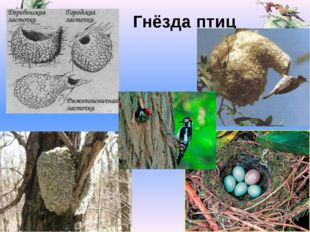 Гнёзда птиц Valya Valya