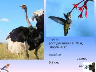 страус рост достигает 2, 75 м, масса 90 кг колибри размер 5,7 см, вес 1,6 г V