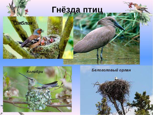 Гнёзда птиц Мотоголовая цапля Зяблик Колибри Белоголовый орлан Valya